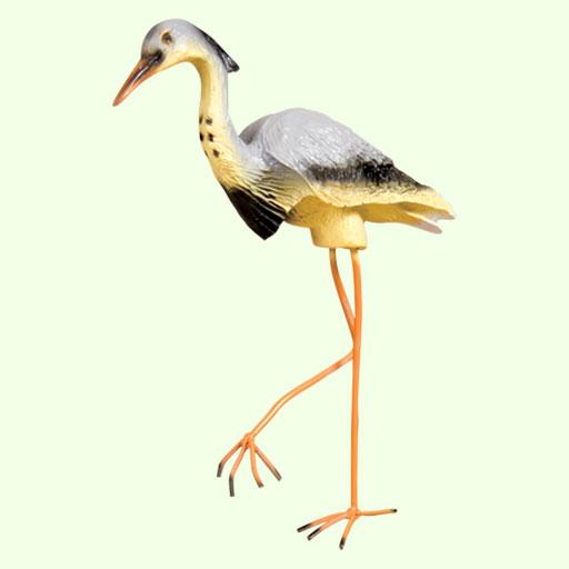 Учёные обратили внимание, что стоя на одной ноге, отдыхают только водоплавающие птицы