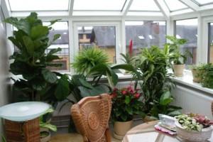 Создаем сад на балконе и лоджии