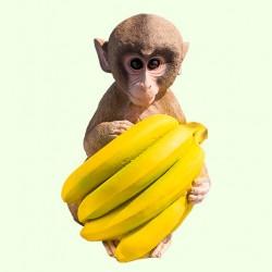 Урна для праха Обезьяна с бананами